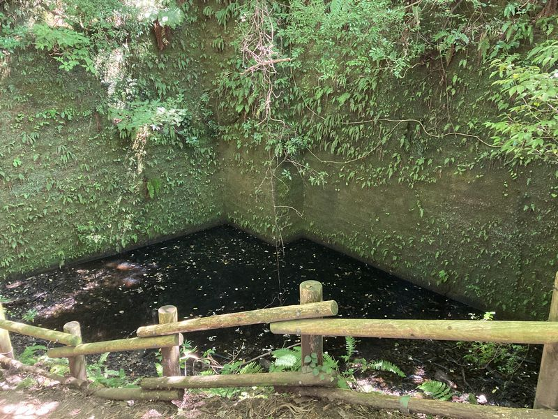 鋸山 モリアオガエルの池
